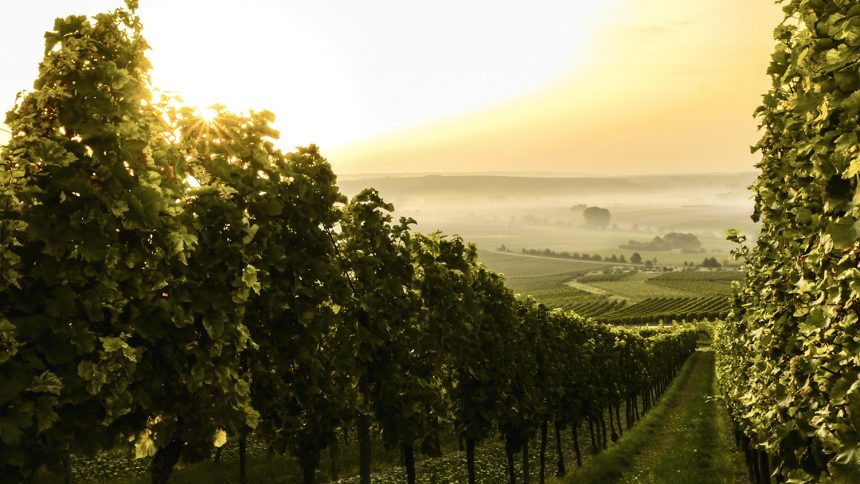 Australia's Best – Vineyards