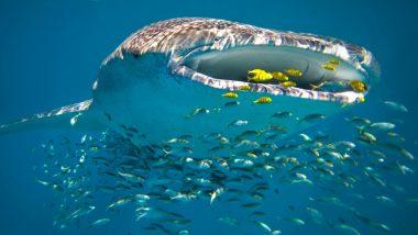 6 Day Tour Ningaloo Reef