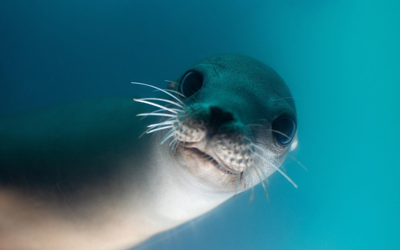 Seal Swim