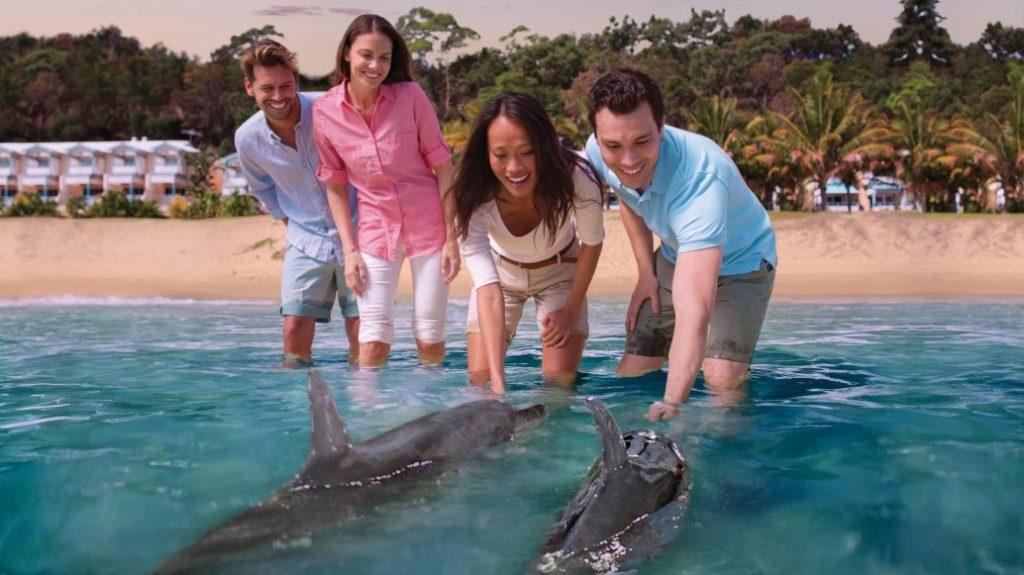 Dolphin Feeding, Moreton Island, QLD