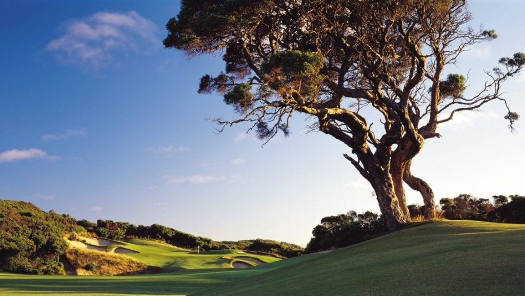 Tree and golf course at The National Golf Club, Mornington Peninsula, VIC