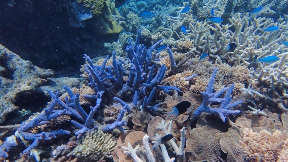 Haggerstone Island Coral