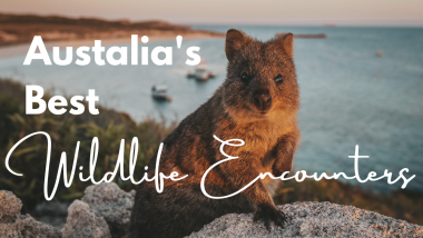 Australia's Best – Wildlife Encounters