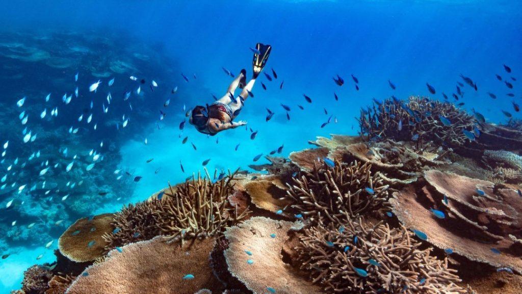 Orpheus Island Diving