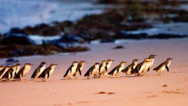 Phillip Island, VIC